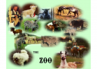 Webquest: The zoo | Recurso educativo 42986