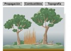 Incendios Forestales | Recurso educativo 43187