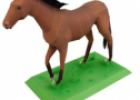 Animales: Caballo | Recurso educativo 31173