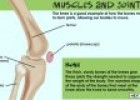 Bones, muscles and joints: the Musculoskeletal System | Recurso educativo 72895