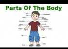 Body parts | Recurso educativo 598029